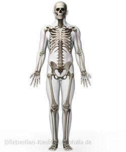 Skelett-Vorderseite