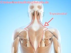 Trapezmuskel