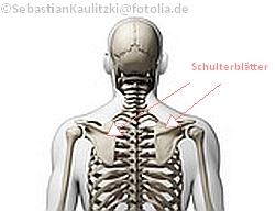 Schulterblätter